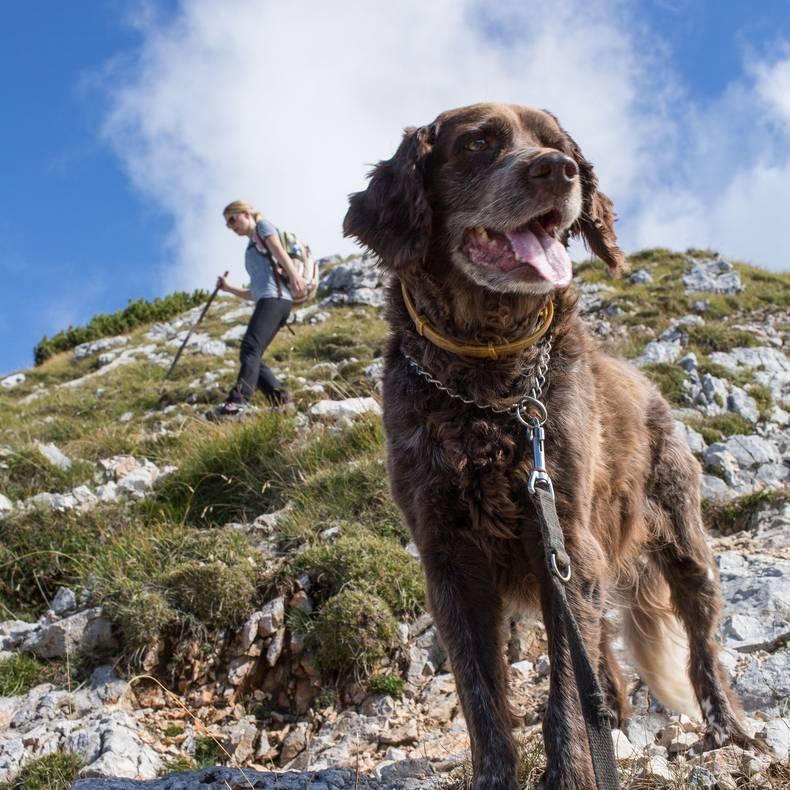 Wanderung mit Hund am Kosiak