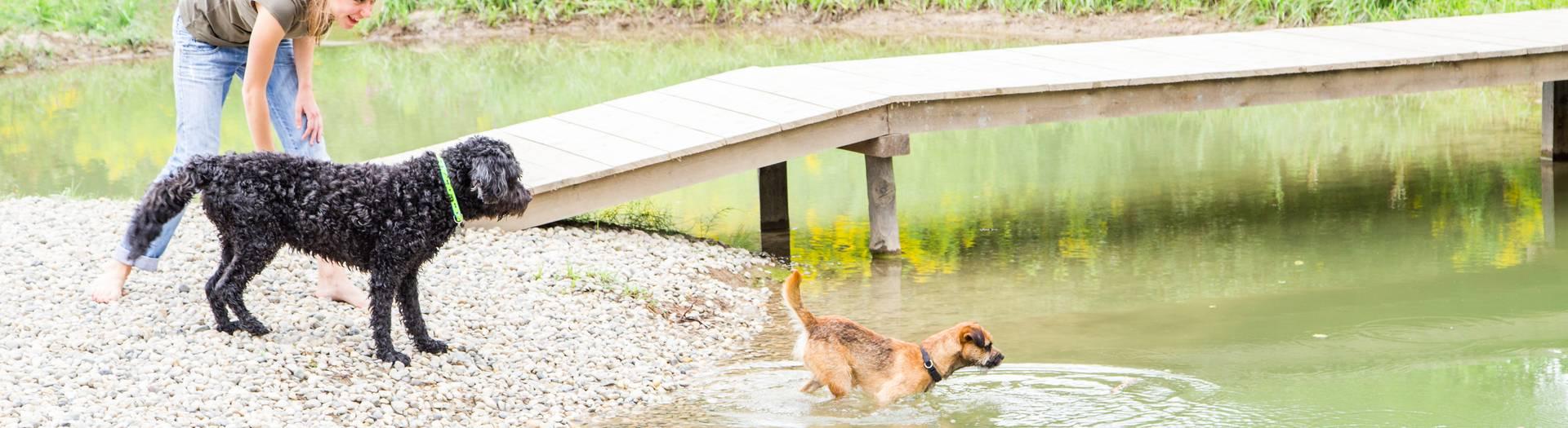Mit dem Hund am Campingplatz Rosental Roz